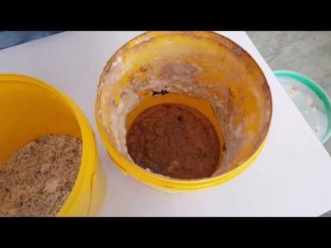 Umpan ikan Patin (kelapa parut peram) Part 1