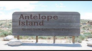 Antelope Island State Park Utah USA Buffalo Bison Bighorn Sheep Antelope Camping Vacation