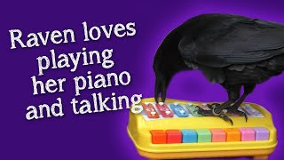 Fable the Raven   Hang out with Fable and her piano   Chatting and hidden camera