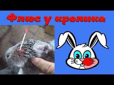ФЛЮС У КРОЛИКА (16+)