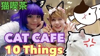 Video CAT CAFE 10 THINGS☆ CAT CAFE MOCHA with Hello Batty download MP3, 3GP, MP4, WEBM, AVI, FLV September 2018