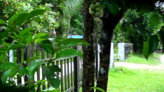 Kehijauan dan kebun buah-buahan di halaman.