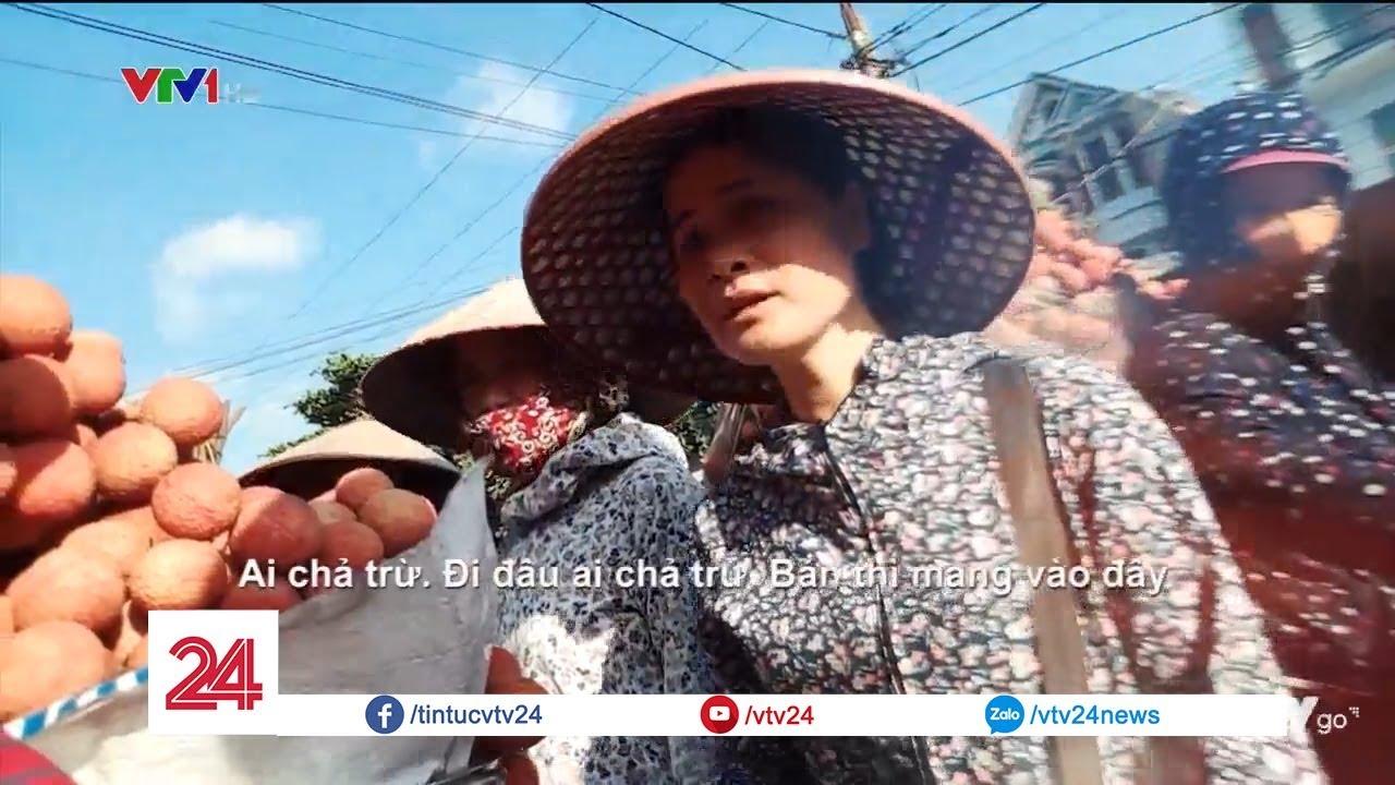 Tái diễn luật ngầm của thương lái thu mua vải ở Lục Ngạn, Bắc Giang    VTV24