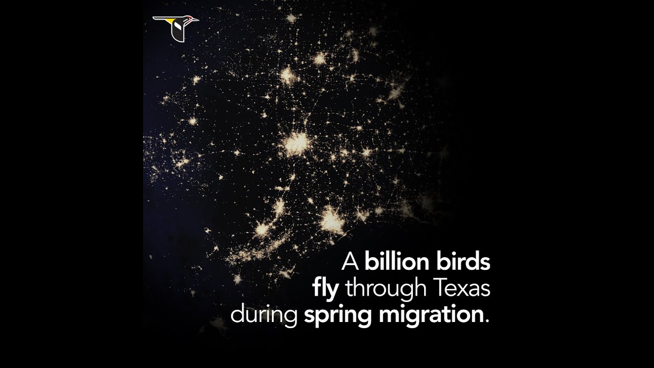 Lights Out For Birds Conservation Houston Audubon