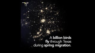 Lights Out Texas! - Spring Migration 2020
