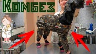 Комбинезон для собак. Покупки одежды для собак.