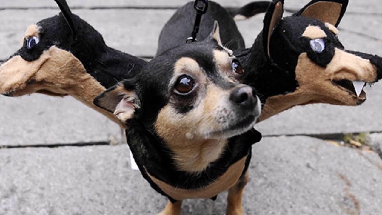 TOP 20 idee costumi di halloween per cani / top 20 ideas ...