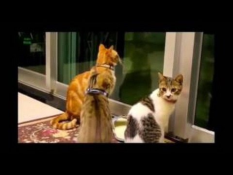 TRY NOT TO LAUGH (HARDEST VERSION) - Funniest CAT & DOG Compilation December 2016