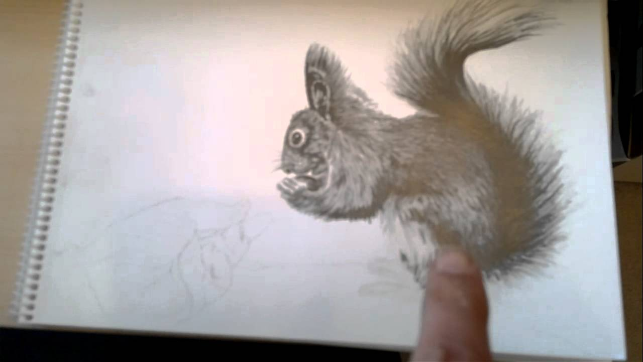 using graphite grade pencils to draw a squirrel by asm oct 2012