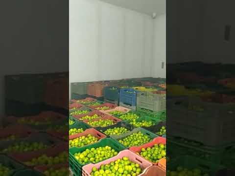 CA Lemon & Apple Cold Storage Fruits & Vegetable