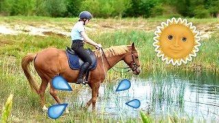 blok paard vrijheidsdressuur