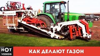 видео рулонная трава - у нас