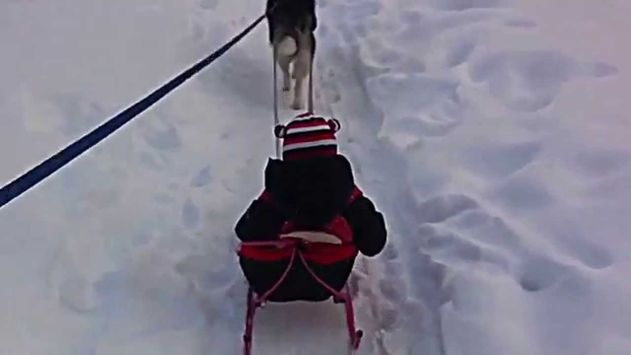 Дизельный мотоблок Чувашпиллер-8 - YouTube