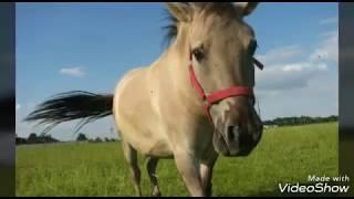 Mój koń i ja nasza historia