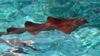 Ambergris Caye, Belize, North America