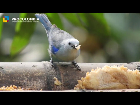 Colombia, territory of birds and peace