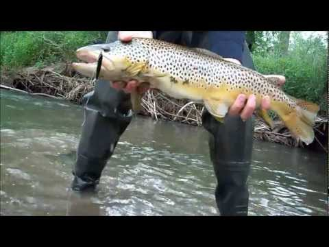 Trout of 2012 - Driftless Area of MN/WI