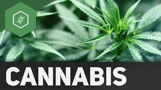 Wie wirkt Cannabis?!