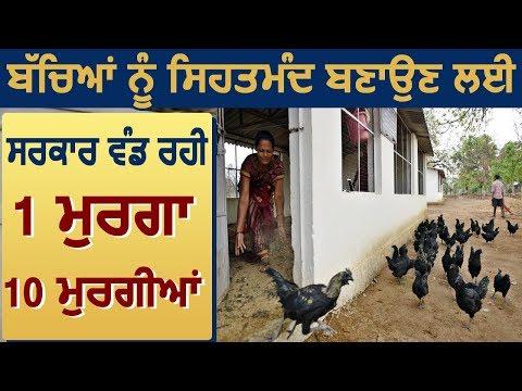 बच्चों को सेहतमंद बनाने के लिए Gujarat Government  देने जा रही है 1 मुर्गा और 10 मुर्गियां