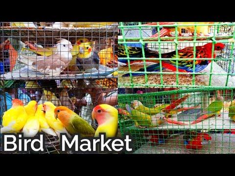 Kolkata Bird Market Visit 2nd June 2019 The Largest Bird Market In Asia