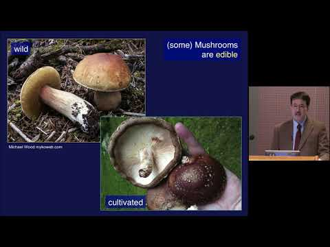 How Mushrooms Changed the World on YouTube