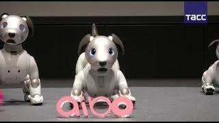 Презентация нового робота-собаки Sony