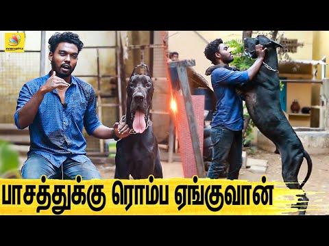 குழந்தையை பாத்துக்குற மாதிரி பாத்துக்கணும் : All About Dogs EPISODE  1 | The Great Dane