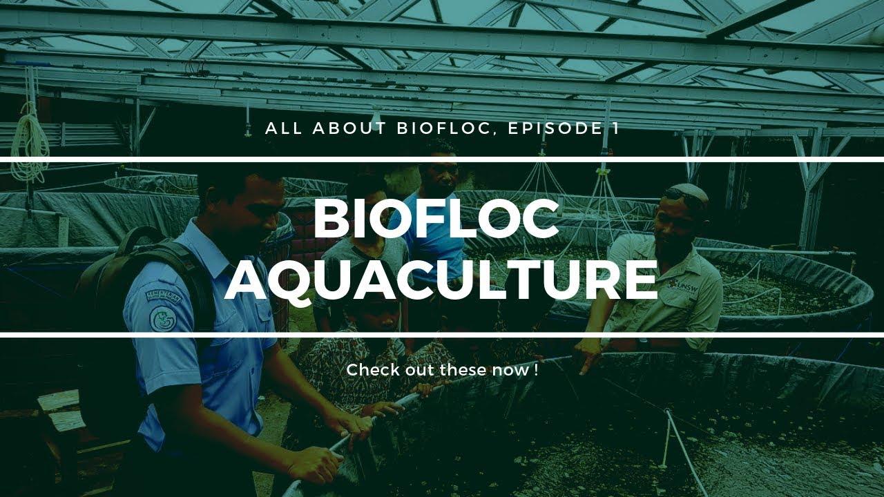 How Biofloc Technology is Best Fish Farming Method ? - Udvob