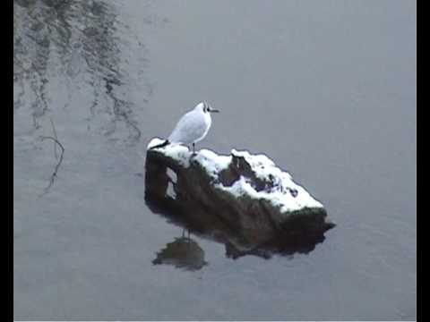 The Bird on the River Wye