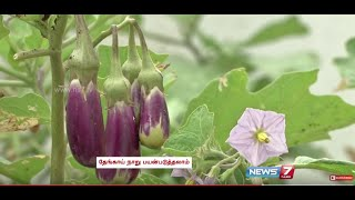 Grow your own Vegetables and herbs in Terrace Garden | Poovali | News7 Tamil