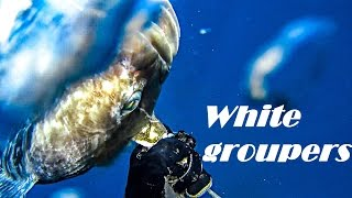 Spearfishing | WHITE GROUPERS in the SARONIC Gulf - Ψαροντούφεκο Σφυρίδες στον Σαρωνικό ✅