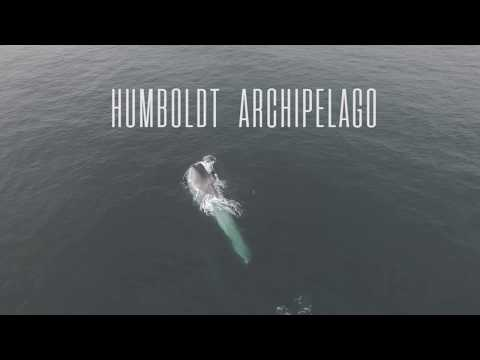 Explore the Humboldt Archipelago Hope Spot in Chile