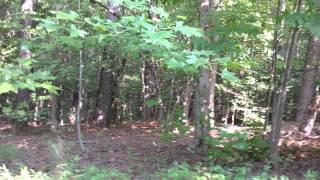 Teaching My Dog Rabbit Hunting