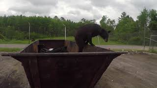 Alpha Generation - Taking Risks To Tell The Story - Black Bear Encounter