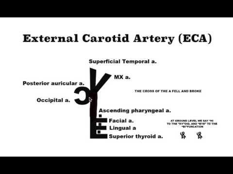 External Carotid Artery mnemonic - YouTube