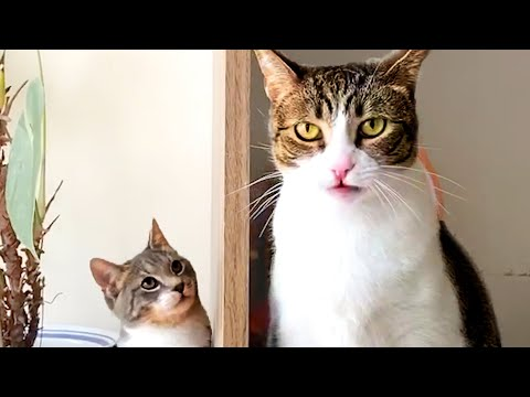 CAT VIDEOS TO START YOUR SEPTEMBER! Cute and Funny Cats 🐱