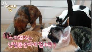 ♥9야옹이의 애기모찌네♥스크래처는 신삥이 최고지