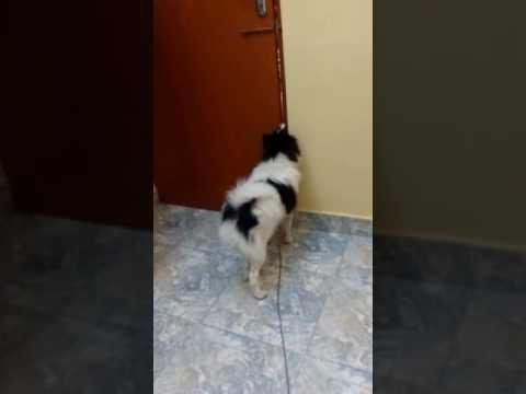 My Kutty Dog