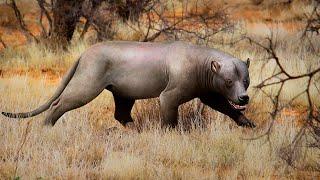 Najpotężniejsze drapieżniki Afryki po dinozaurach
