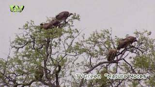 Scavengers in Kruger National Park