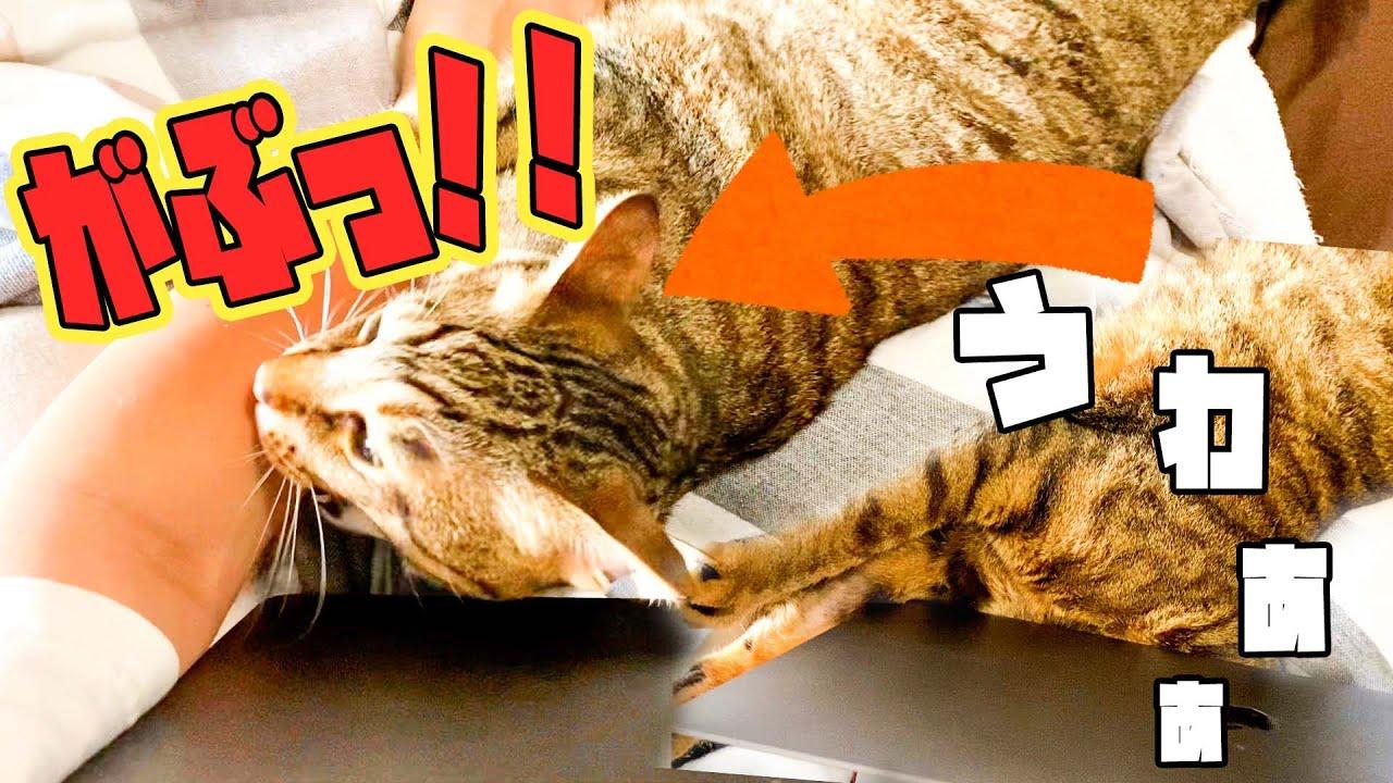 パソコンの下に頭を突っ込んでパニックになる猫