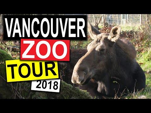 Vancouver Zoo Tour 2018 | Vancouver Travel Guide