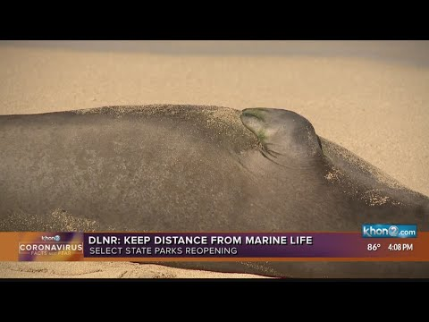 Reminder: Keep your distance from marine life