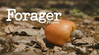 [Brand Video] Vietnam's Cashew Market: The Forager Project