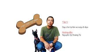 TẬP 5: DẠY CHÓ CƠ BẢN: Hướng dẫn chó tự lên xe máy ngồi đi dạo.