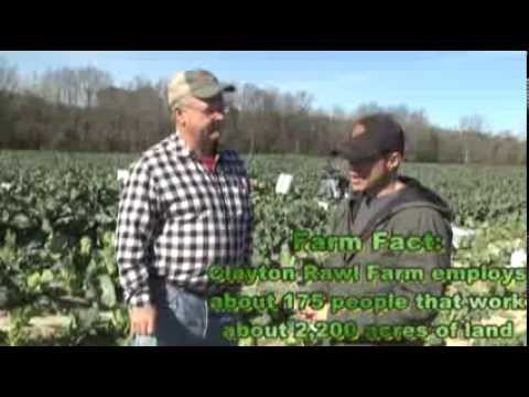 Farm Eye for the Country Guy - Collards: The Smell of Money