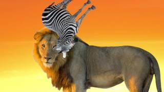 少々ストーリーが難解な昔話「さるかに合戦」。サバンナの動物たちにた...