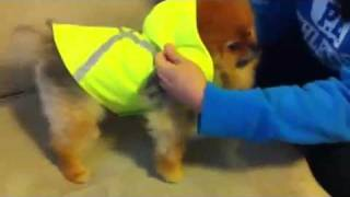 Tobi The Pom : Doggie Clothes