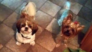 Собачьи приколы Лаки и друзья Mila Bali