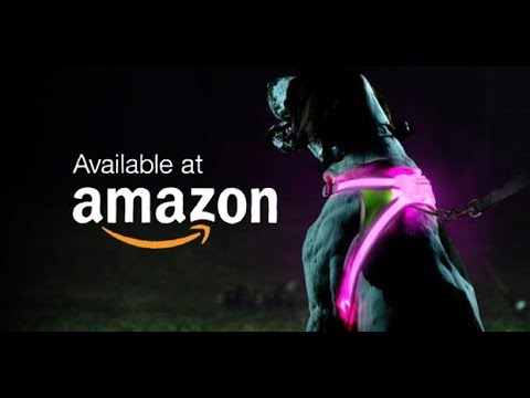 7-amazing-pet-gadgets-you-must-have-available-on-amazon-2020